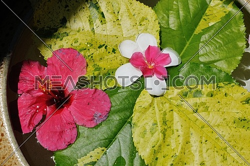 water cup with beautiful flowers, a variety of background colors in spa health and beauty center
