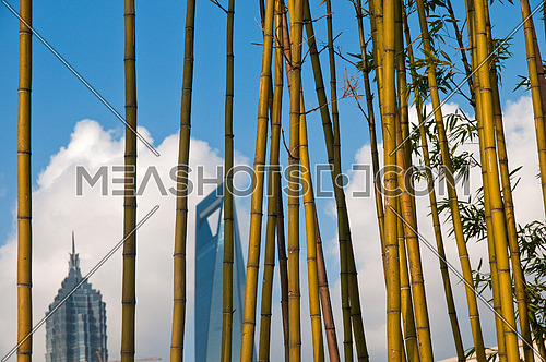 shanghai pudong view from puxi new bund on a sunny day with white clouds and blue sky behind bamboo trees