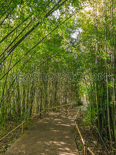 walk way shaded withTall green bamboo shoots in a garden