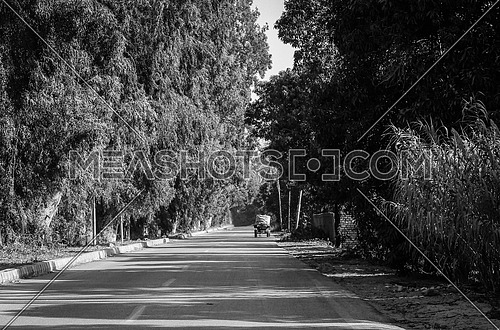 a black and white road covered with trees