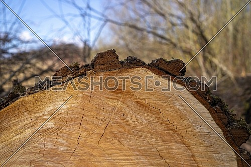 Close up on the cross section of a tree trunk showing the growth rings outdoors in a concept of natural resources and forestry
