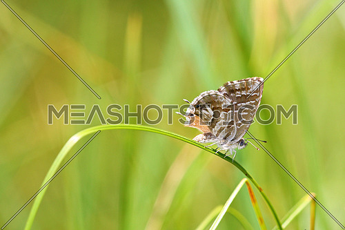 Butterfly on a strand of grass