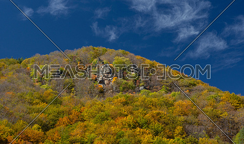 Colorful autumn landscape. Spreading autumn trees in the sunny autumn forest