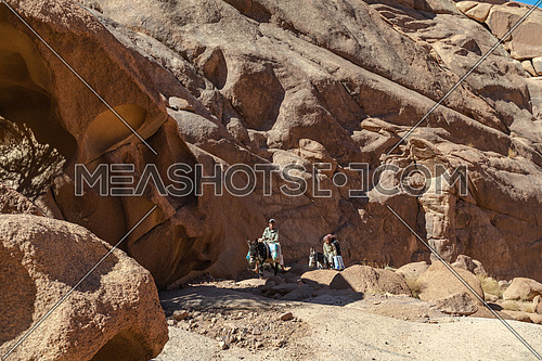 Bedouin children riding a donky at SInai Mountain by day
