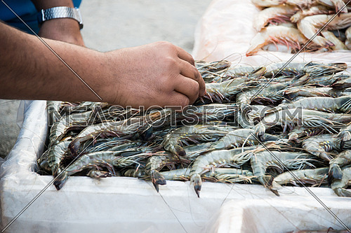 close uup of a hand choosing prawns in Fish Market In Dubai