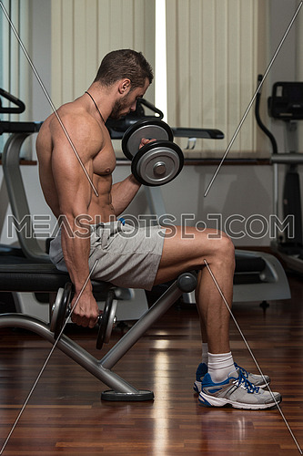 Fit Athlete Working Out Biceps - Dumbbell Concentration Curls