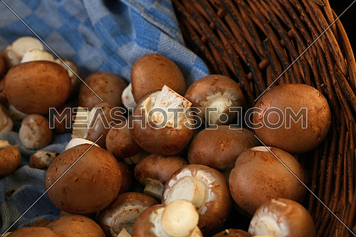 Close up immature brown champignon edible mushrooms (Agaricus bisporus) in wicker wooden basket at retail display, high angle view