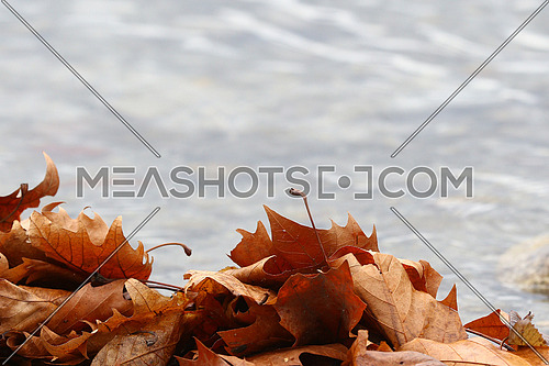 Autumn leaves framing the bottom third with blurred water background