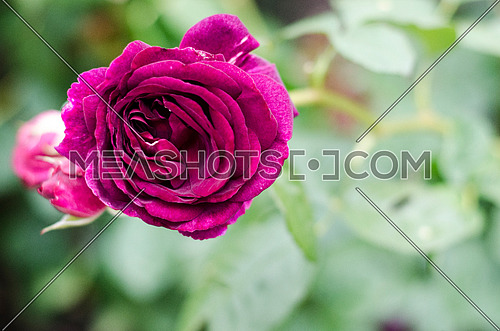 a blossomed purple flower with lots of leafs