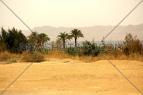 a photo from inside a rural area in Egypt showing palm trees , lake and mountain at the background