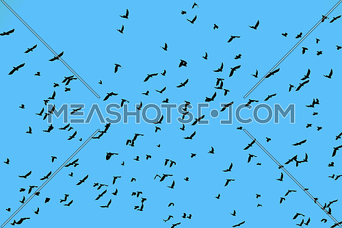 Silhouettes of big flock of many pigeon birds flying high and hovering in clear blue sky, low angle view