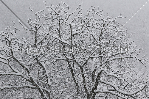 Trees covered in fresh snow during a heavy snowstorm background