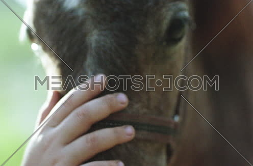 Close shot for a girl's hand touching a donkey's head