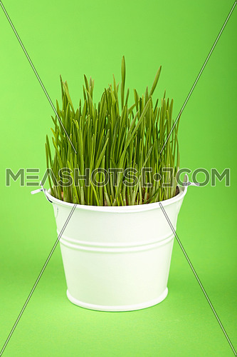 Spring fresh grass growing in small white painted metal bucket, close up over green paper background, low angle side view