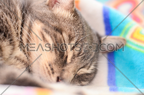 A sleeping cat on a colorful blanket