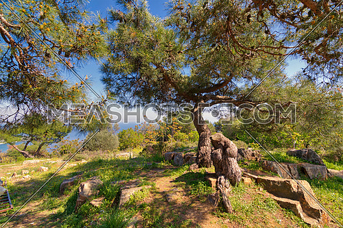 Spring meadow with green tree, grass, rocks and clear blue sky at the top of mountains of Buyukada island (Princes island), Istanbul, Turkey
