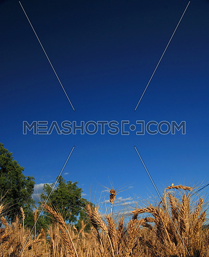 wheat and blue sky   (NIKON D80; 6.7.2007; 1/125 at f/8; ISO 100; white balance: Auto; focal length: 18 mm)