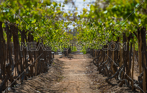 an empty vines farm