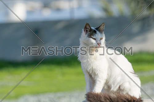Wild and homeless cat on stone floor. Abandoned cat looking in camera. Adopt a cat concept photo.  Domestic cat lost. Adoption of a pet.