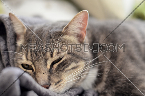 A sleepy relaxing cat on a grey blanket