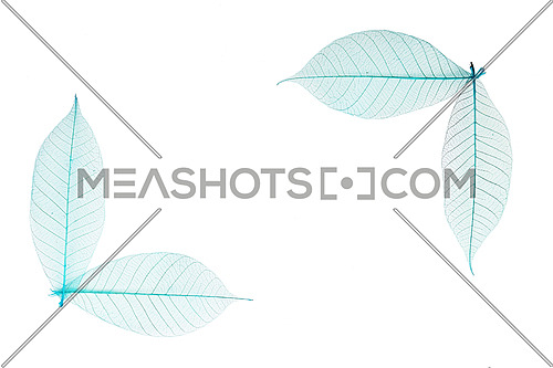 Two border frame corners of blue dried skeleton leaves decoration isolated on white background