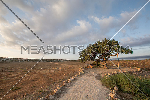 Lonely tree near Agia Napa, Cyprus