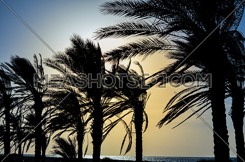 A silhouette view of palm trees on the beach by sun set magical hour
