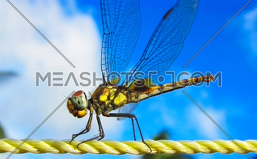 A Dragon fly on a plastic rope against blue sky