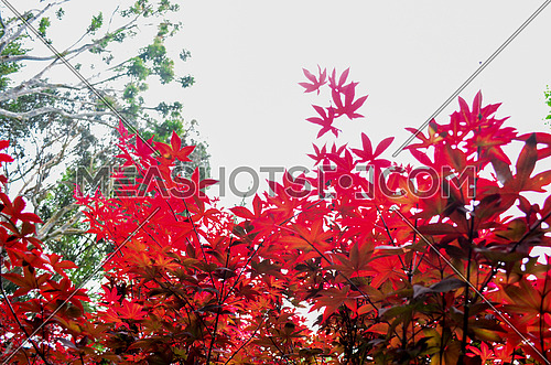 red leaves looking so bright against the sky