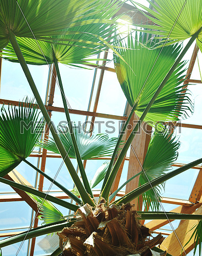 modern home roof wood roof construction with many windows blue sky and green palm leafs