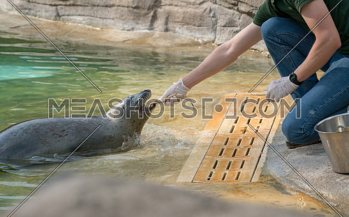 The Zookeeper is feeding the seal with fish,