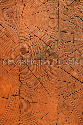 Unpainted lacquered pine wooden block beam end wall texture background