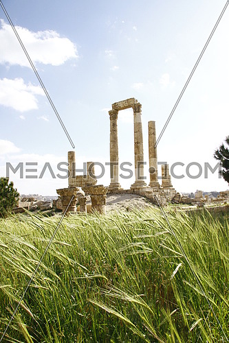 ancient columns standing in amman citadel , grass and wheat plant in the foreground , cloudy sky in the background