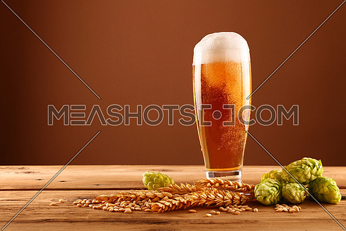 Close up one glass of beer with froth and bubbles, green hops and barley grain and spikes on wooden table over dark brown background with copy space, low angle side view