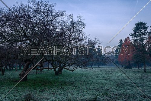 Autumnal cold morning on meadow with hoarfrost on plants and beautiful colors.Italy near Milan.