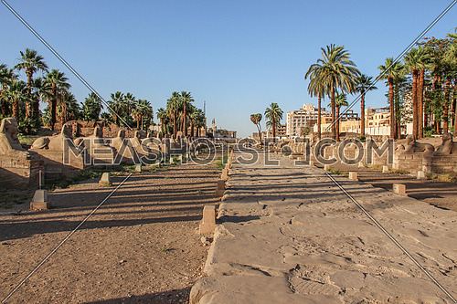 a photo for Luxor temple in Luxor city,  Egypt ,