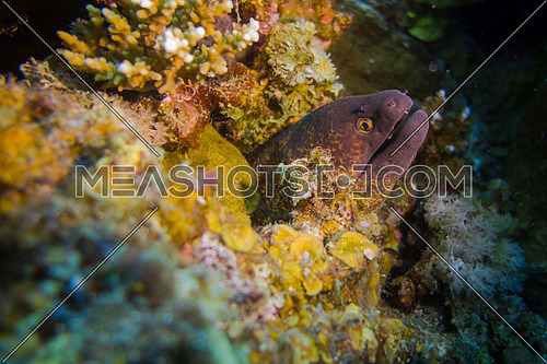 underwater shot for an eel in the red sea Egypt