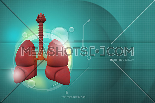 3d illustration of Human lungs