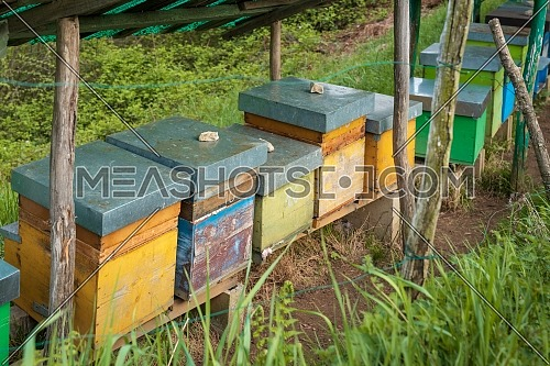 Bee hives on meadow in countryside of Italy,Bergamo(Seriana valley}The houses of the bees are placed on the green grass in the mountains. Private enterprise for beekeeping. Honey healthy food products.