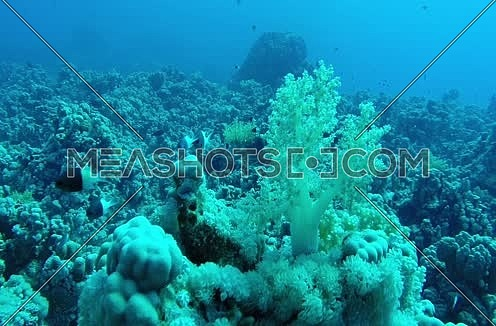 Follow Shot for Fishes underwater at Red Sea