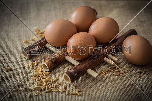 Chicken eggs and wheat on grey background