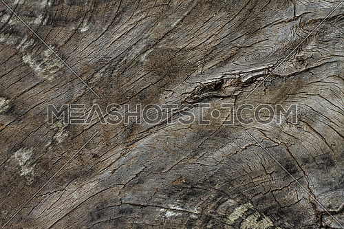 Textured old wooden log with cracks and nodes