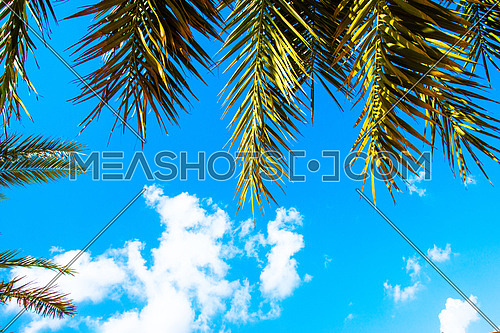 a low angle view of the sky and clouds and palm trees