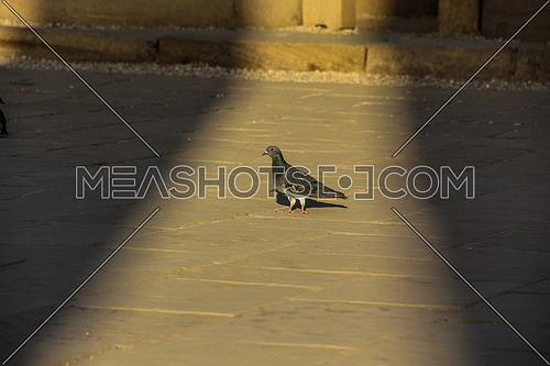 a photo of a pigeon on the ground between lights