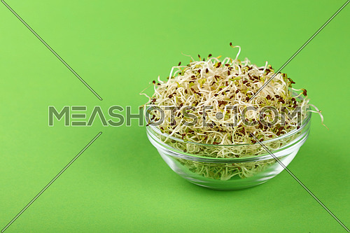 Close up fresh mung bean microgreen salad sprouts in glass bowl over green background with copy space, high angle view