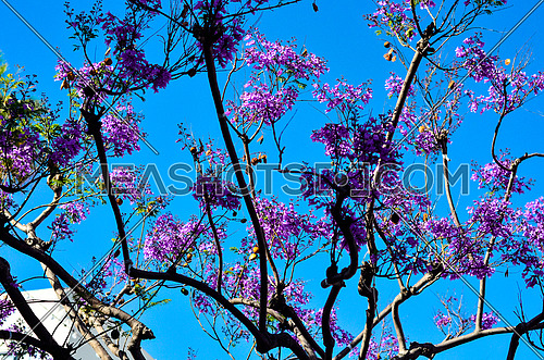 purple bell flower  tree with lights hanging from the tree, blue sky