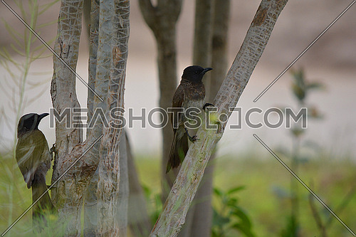 two birds on tree branch