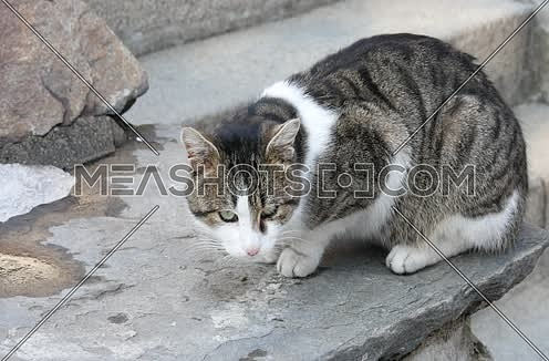 Wild and homeless cat on asphalt floor. Abandoned cat looking in camera. Adopt a cat concept photo.