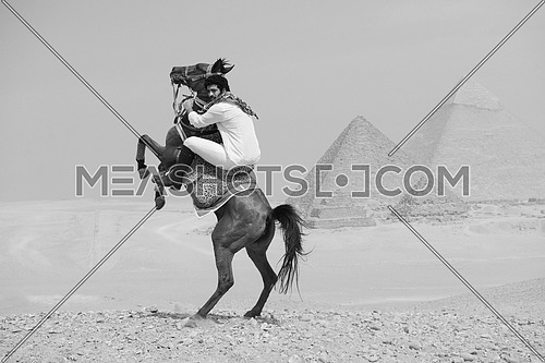 black and white image of young Egyptian man horse rearing in desert giza platue with the pyramids in background