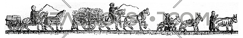 Shopping cart stones, Foiu wagon, Mule, Bouvier, vintage engraved illustration. Magasin Pittoresque 1846.